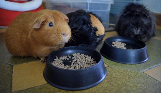 Trisqui, Brownie y Kovu comiendo pienso
