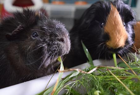 Kovu y Brownie comiendo plantas