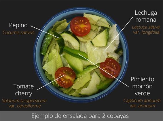 Ejemplo de ensalada para 2 cobayas
