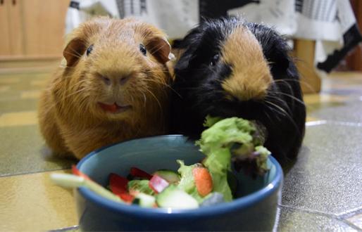 Trisqui y Brownie comiendo verduras