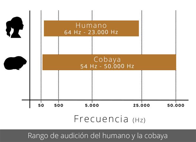 Rango de audición del humano y la cobaya
