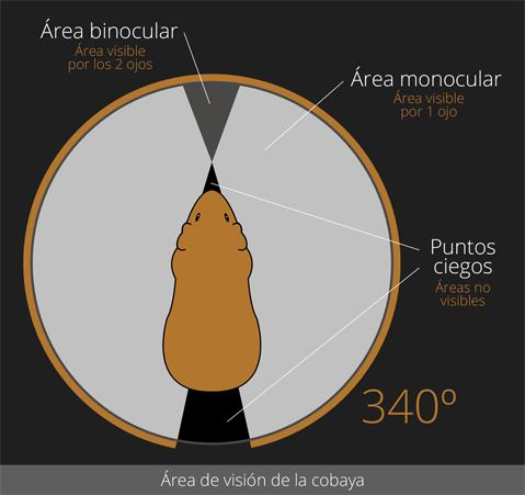 Área de visión de la cobaya