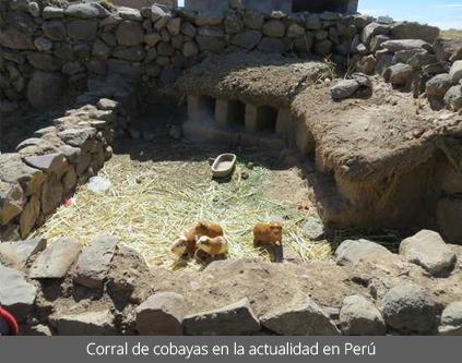 Corral de cobayas en la actualidad en Perú