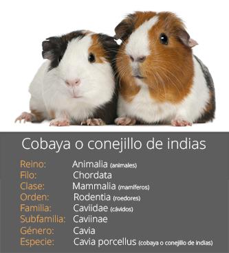 Ficha de la cobaya
