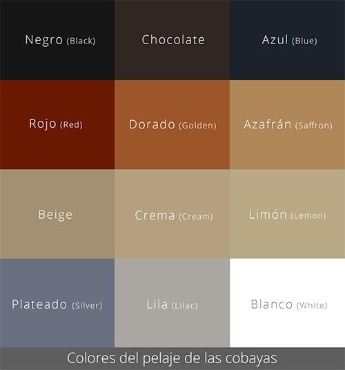 Colores del pelaje de las cobayas